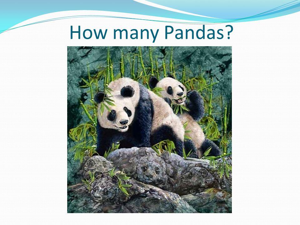 How many Pandas?