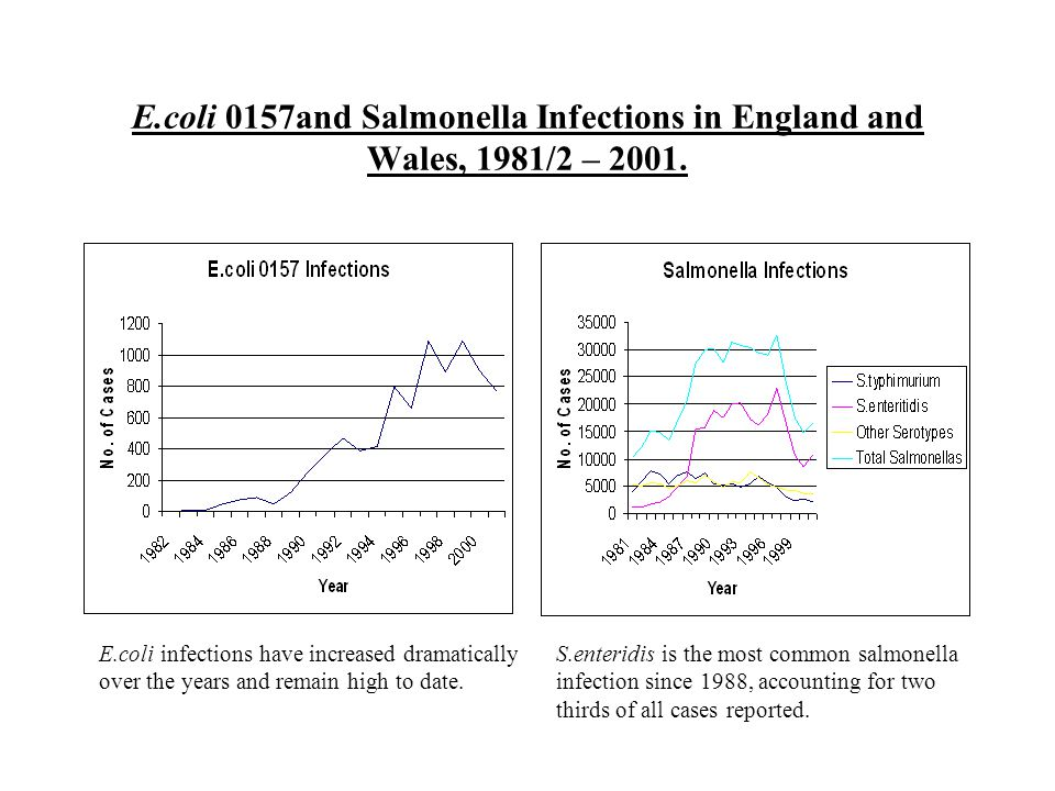 E.coli 0157and Salmonella Infections in England and Wales, 1981/2 – 2001. E.coli infections have increased dramatically over the years and remain high