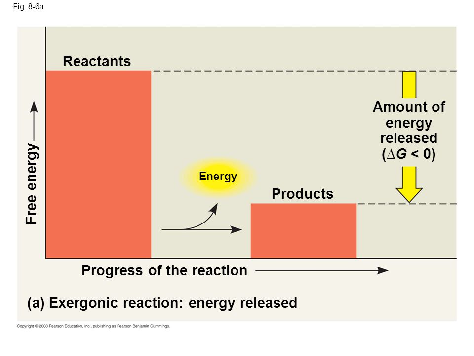 Fig. 8-6a Energy (a) Exergonic reaction: energy released Progress of the reaction Free energy Products Amount of energy released (G < 0) Reactants