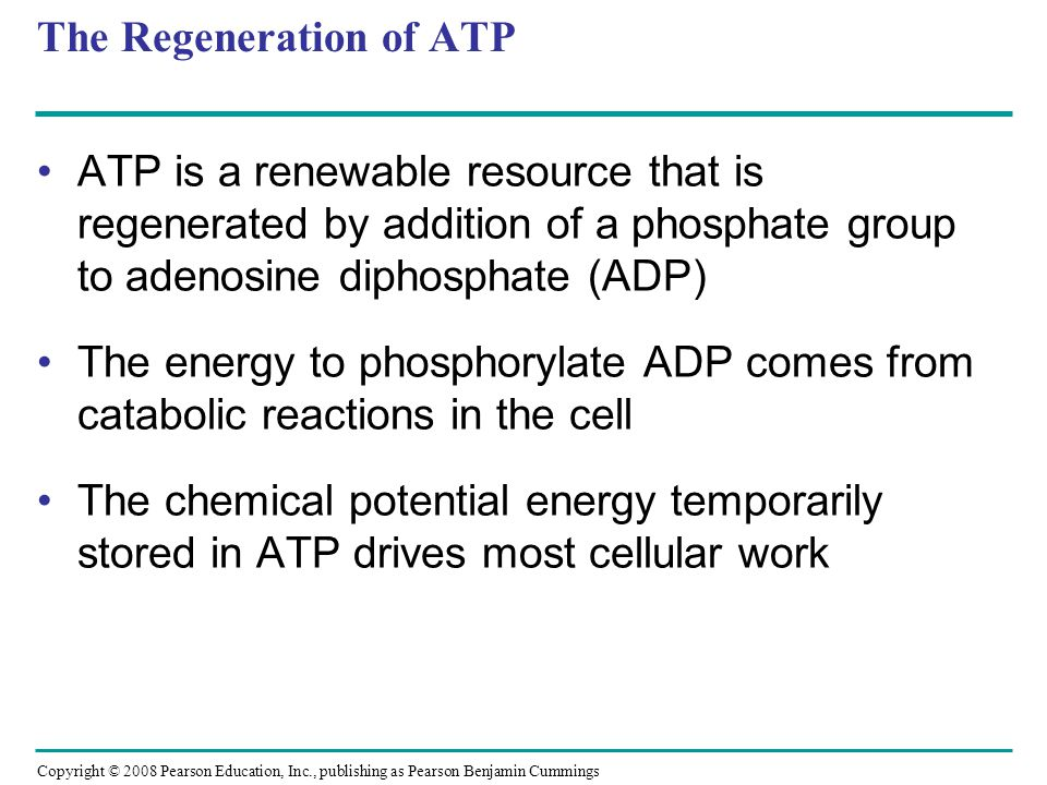 The Regeneration of ATP ATP is a renewable resource that is regenerated by addition of a phosphate group to adenosine diphosphate (ADP) The energy to