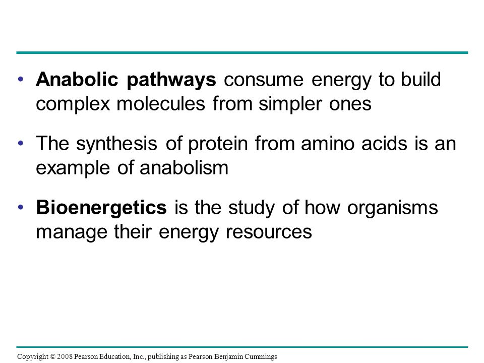 Anabolic pathways consume energy to build complex molecules from simpler ones The synthesis of protein from amino acids is an example of anabolism Bio