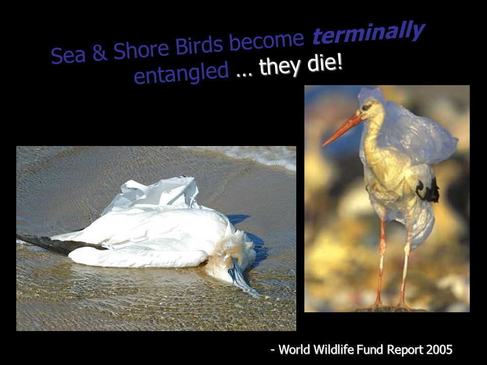 … they die. Sea & Shore Birds become terminally entangled … they die.