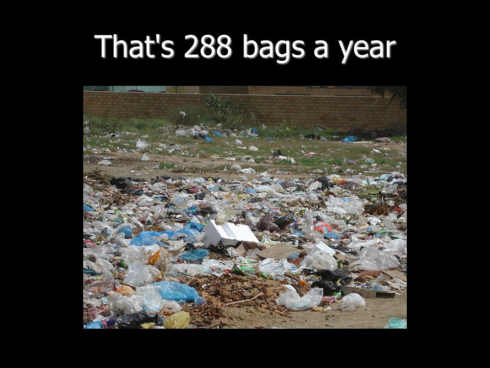 That's 288 bags a year