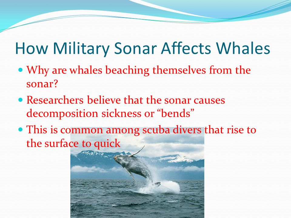 How Military Sonar Affects Whales Why are whales beaching themselves from the sonar? Researchers believe that the sonar causes decomposition sickness