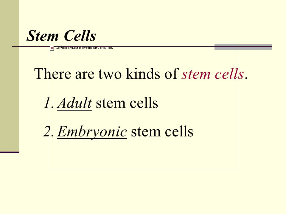 There are two kinds of stem cells. Stem Cells 1.Adult stem cells 2.Embryonic stem cells