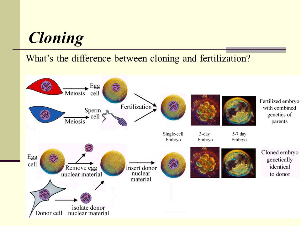 Cloning Whats the difference between cloning and fertilization