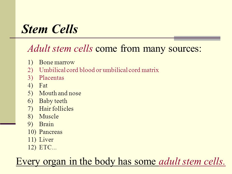Adult stem cells come from many sources: 1)Bone marrow 2)Umbilical cord blood or umbilical cord matrix 3)Placentas 4)Fat 5)Mouth and nose 6)Baby teeth