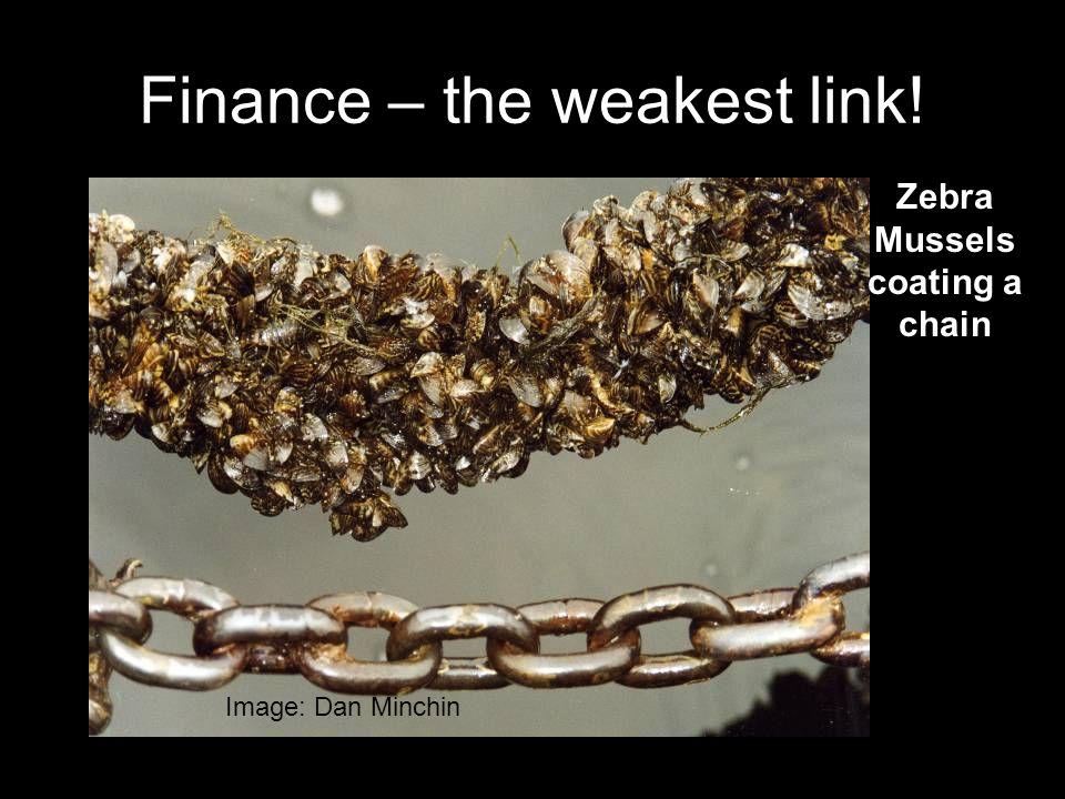 Finance – the weakest link! Image: Dan Minchin Zebra Mussels coating a chain