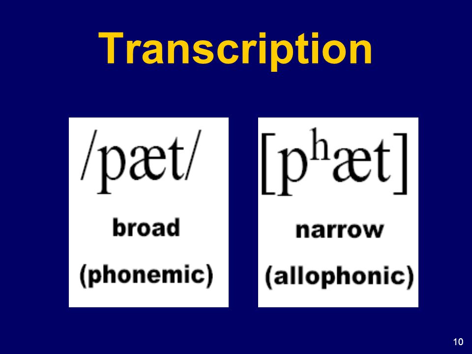 10 Transcription