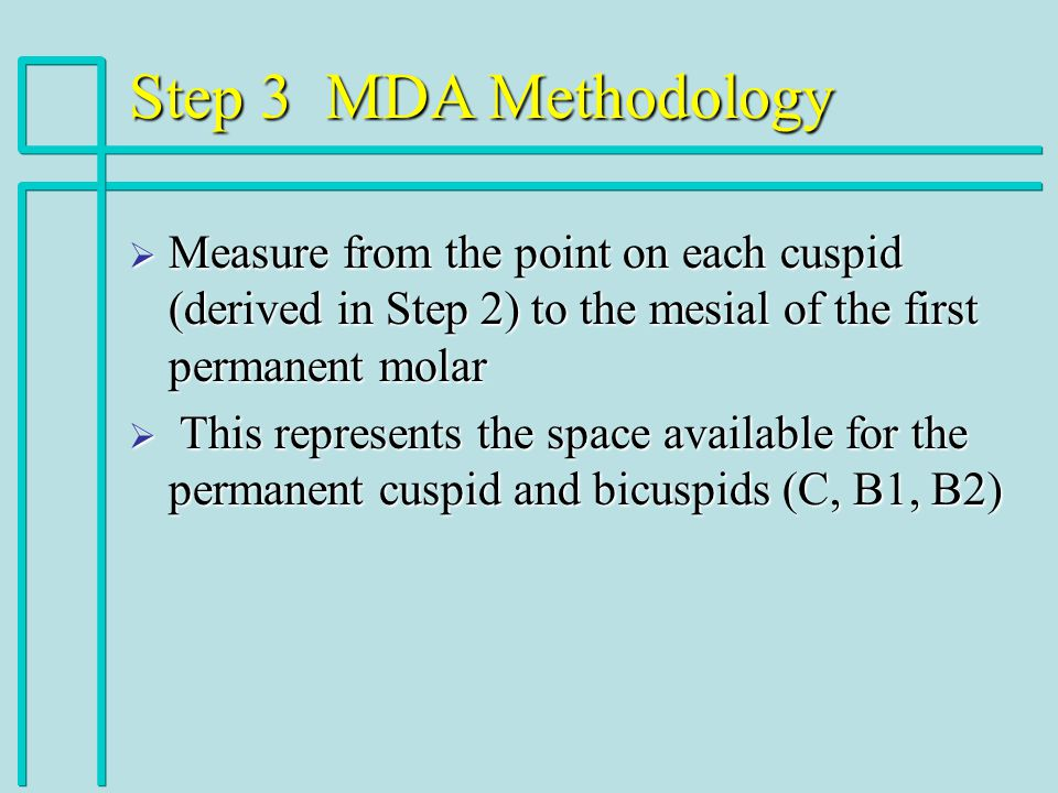 Step 3 MDA Methodology Measure from the point on each cuspid (derived in Step 2) to the mesial of the first permanent molar Measure from the point on