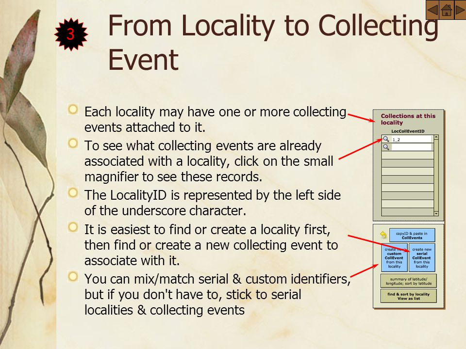 From Locality to Collecting Event Each locality may have one or more collecting events attached to it.