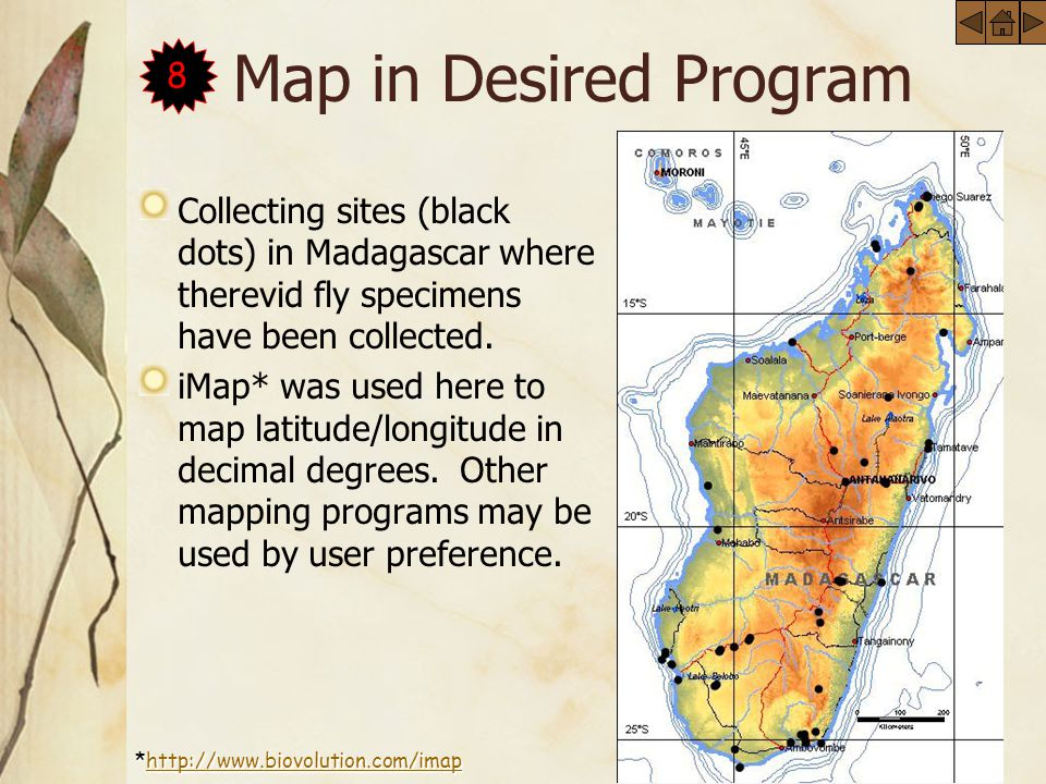Map in Desired Program Collecting sites (black dots) in Madagascar where therevid fly specimens have been collected.