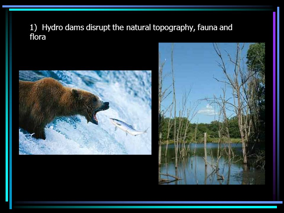 1) Hydro dams disrupt the natural topography, fauna and flora