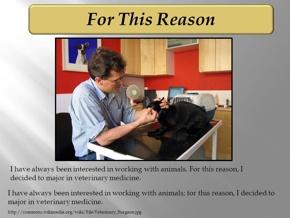 For This Reason I have always been interested in working with animals.