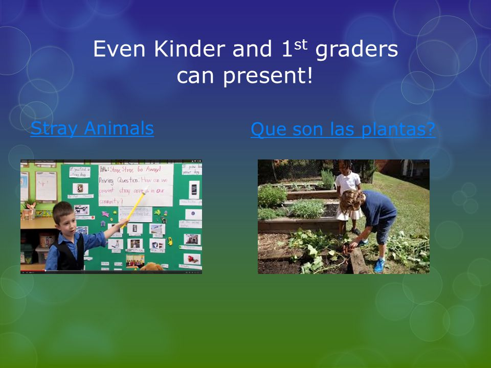 Even Kinder and 1 st graders can present! Que son las plantas? Stray Animals