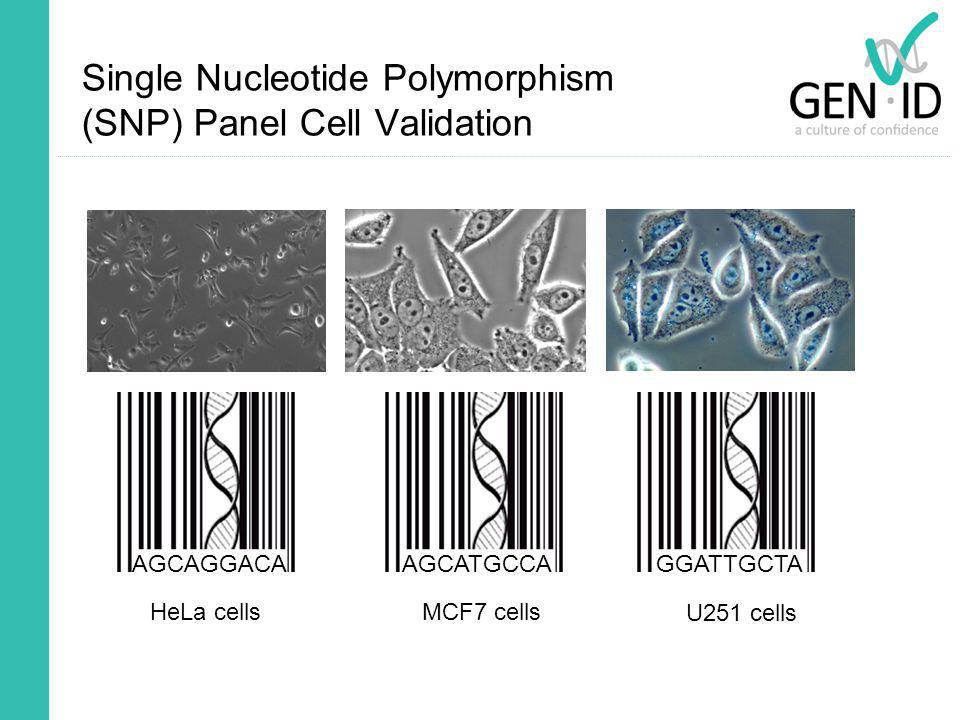 Single Nucleotide Polymorphism (SNP) Panel Cell Validation AGCAGGACA HeLa cells AGCATGCCAGGATTGCTA MCF7 cells U251 cells