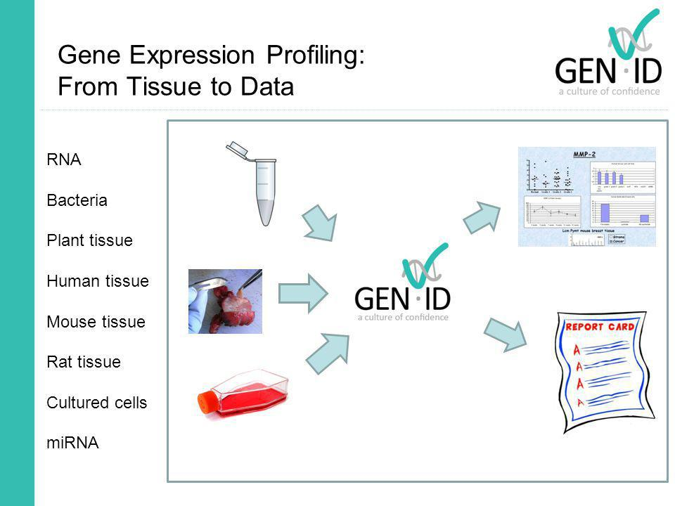 Gene Expression Profiling: From Tissue to Data RNA Bacteria Plant tissue Human tissue Mouse tissue Rat tissue Cultured cells miRNA