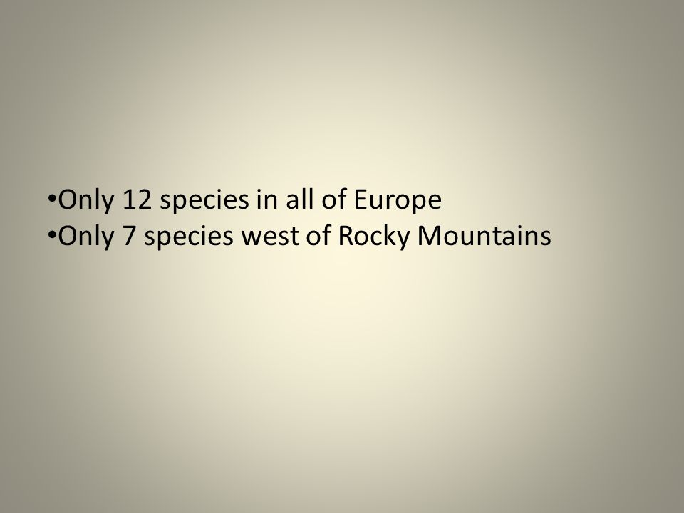 Only 12 species in all of Europe Only 7 species west of Rocky Mountains