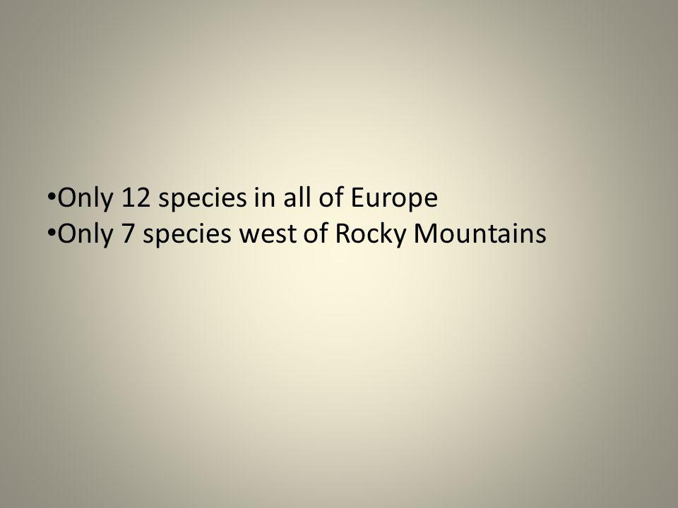 U.S. Geological Survey Dreissena polymorpha Pallas, 1769 Common name: zebra mussel