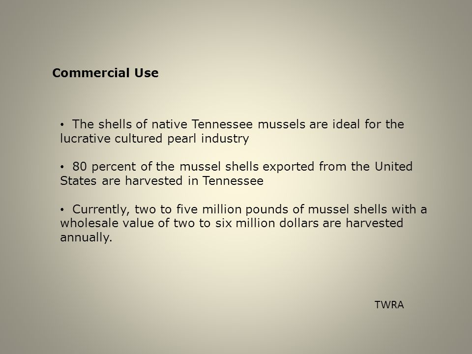 Commercial Use The shells of native Tennessee mussels are ideal for the lucrative cultured pearl industry 80 percent of the mussel shells exported from the United States are harvested in Tennessee Currently, two to five million pounds of mussel shells with a wholesale value of two to six million dollars are harvested annually.