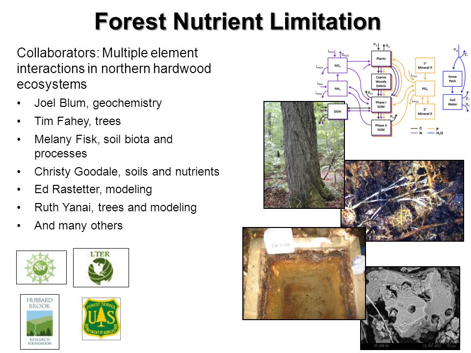 Forest Nutrient Limitation Collaborators: Multiple element interactions in northern hardwood ecosystems Joel Blum, geochemistry Tim Fahey, trees Melany Fisk, soil biota and processes Christy Goodale, soils and nutrients Ed Rastetter, modeling Ruth Yanai, trees and modeling And many others