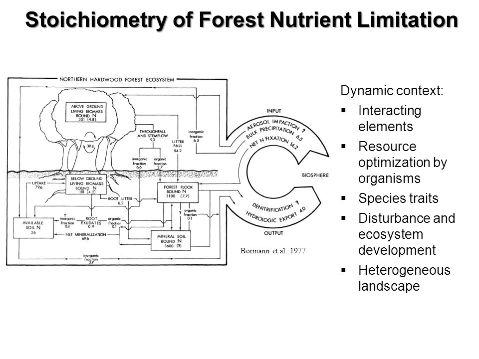 Bormann et al. 1977 Stoichiometry of Forest Nutrient Limitation Dynamic context: Interacting elements Resource optimization by organisms Species trait