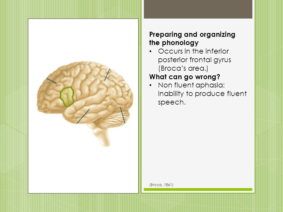 Accessing the correct grammar Occurs in the inferior posterior frontal gyrus (Brocas area.) What can go wrong? Non fluent aphasia: Inability to produc