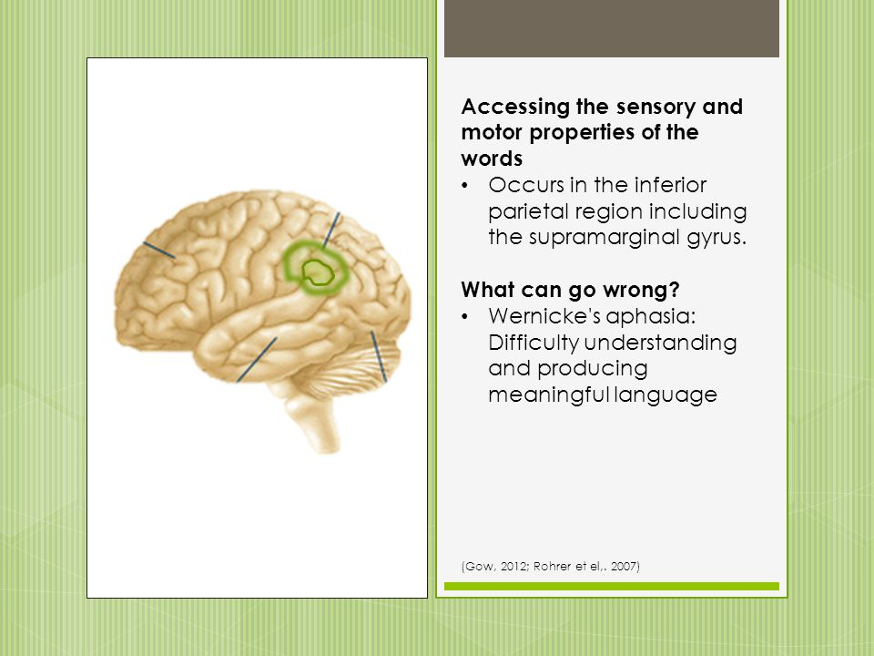 Accessing the phonologic properties of the words Occurs posterior superior temporal sulcus and middle temporal gyrus. What can go wrong? Transcortical