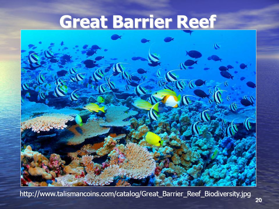20 Great Barrier Reef http://www.talismancoins.com/catalog/Great_Barrier_Reef_Biodiversity.jpg