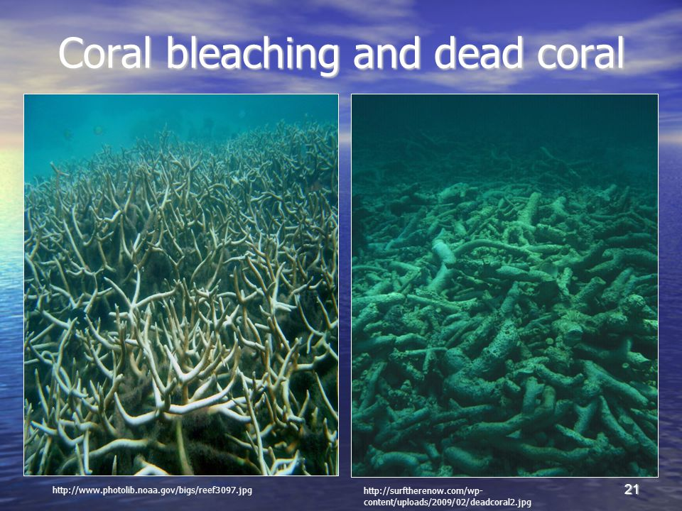 21 Coral bleaching and dead coral http://www.photolib.noaa.gov/bigs/reef3097.jpg http://surftherenow.com/wp- content/uploads/2009/02/deadcoral2.jpg