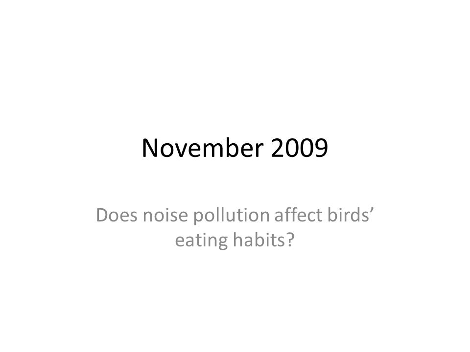 November 2009 Does noise pollution affect birds eating habits