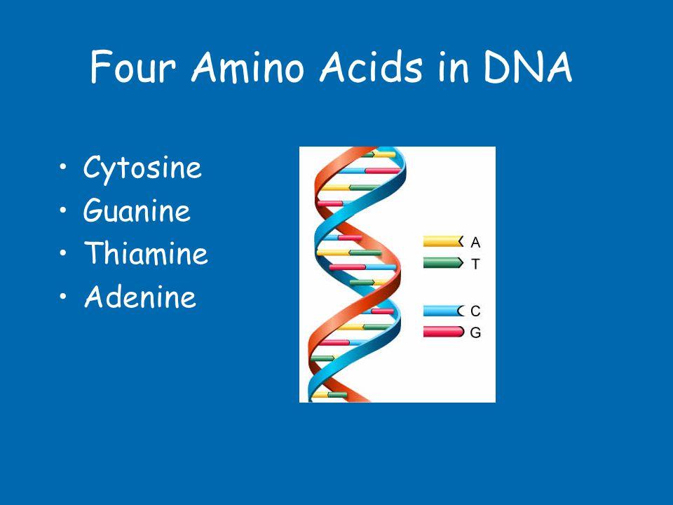 Four Amino Acids in DNA Cytosine Guanine Thiamine Adenine
