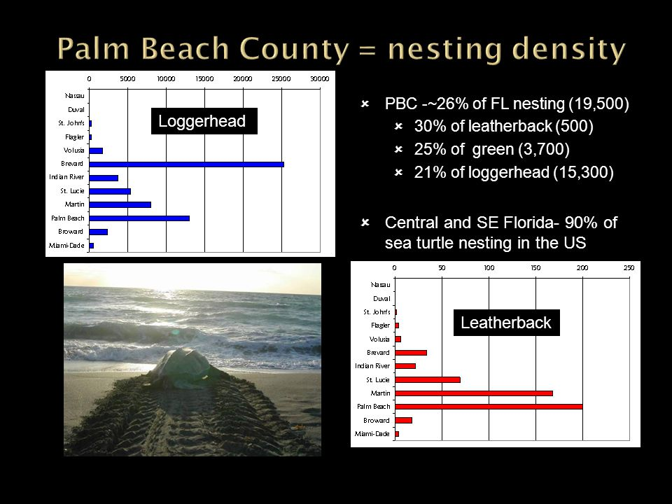 PBC -~26% of FL nesting (19,500) 30% of leatherback (500) 25% of green (3,700) 21% of loggerhead (15,300) Central and SE Florida- 90% of sea turtle ne