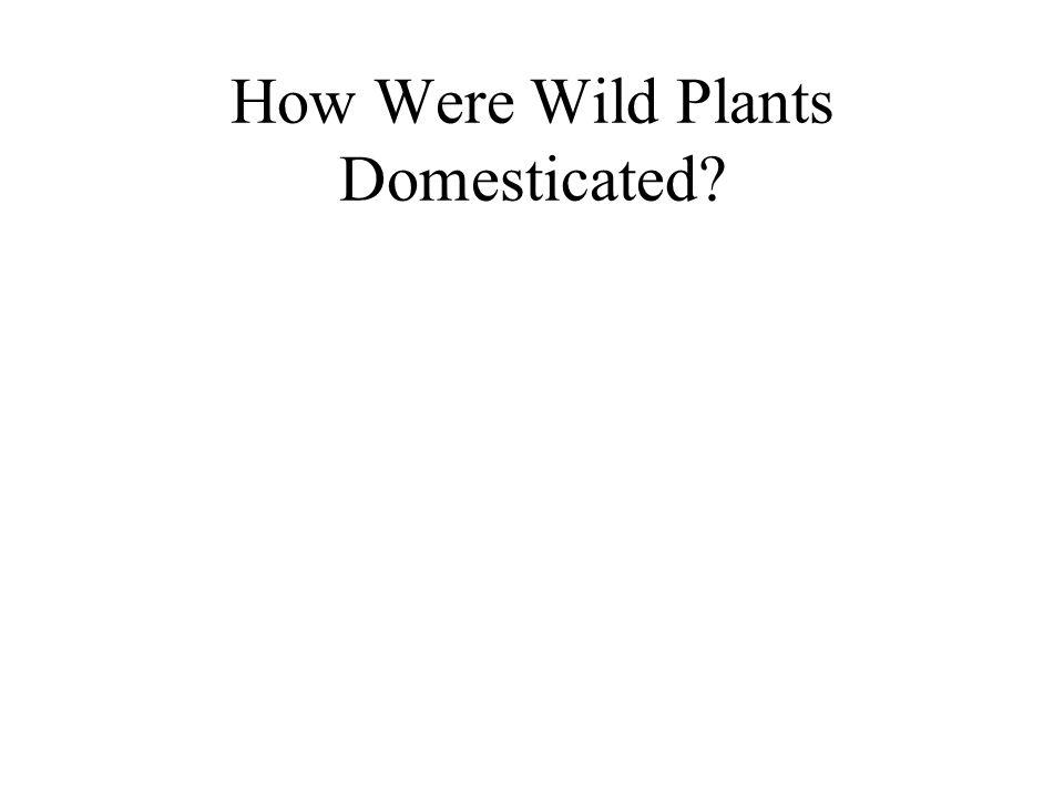 How Were Wild Plants Domesticated?
