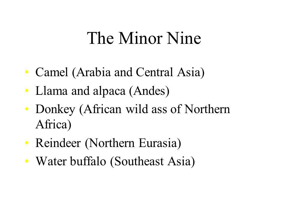 The Minor Nine Camel (Arabia and Central Asia) Llama and alpaca (Andes) Donkey (African wild ass of Northern Africa) Reindeer (Northern Eurasia) Water