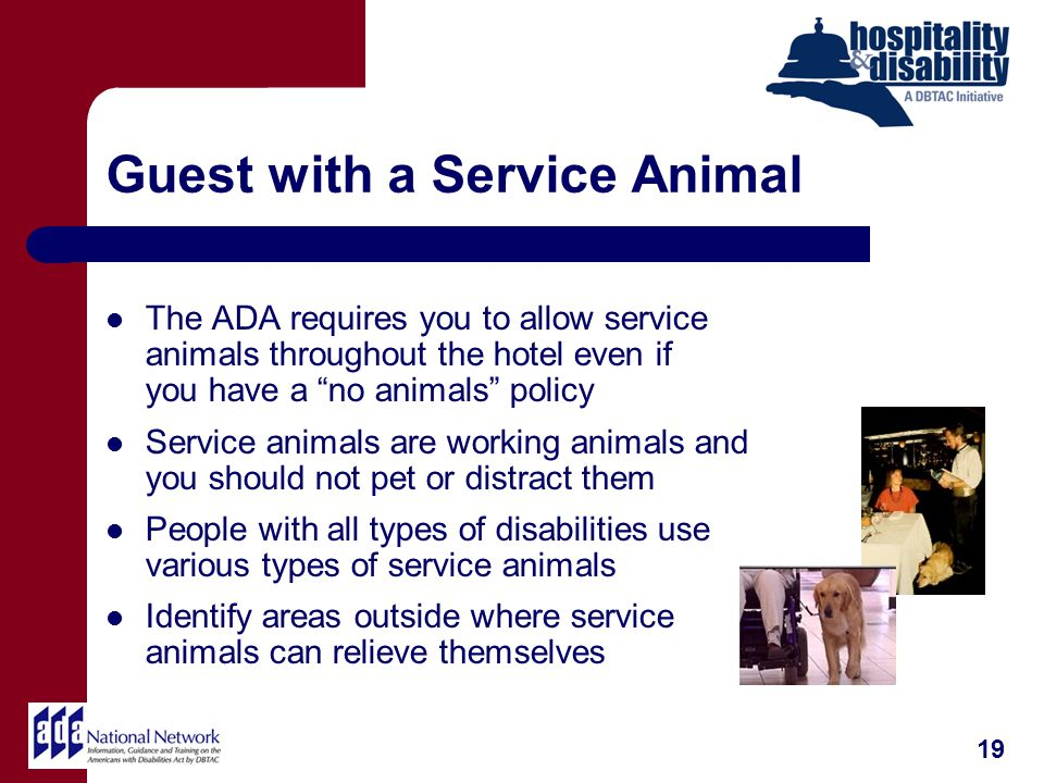 Guest with a Service Animal The ADA requires you to allow service animals throughout the hotel even if you have a no animals policy Service animals are working animals and you should not pet or distract them People with all types of disabilities use various types of service animals Identify areas outside where service animals can relieve themselves 19