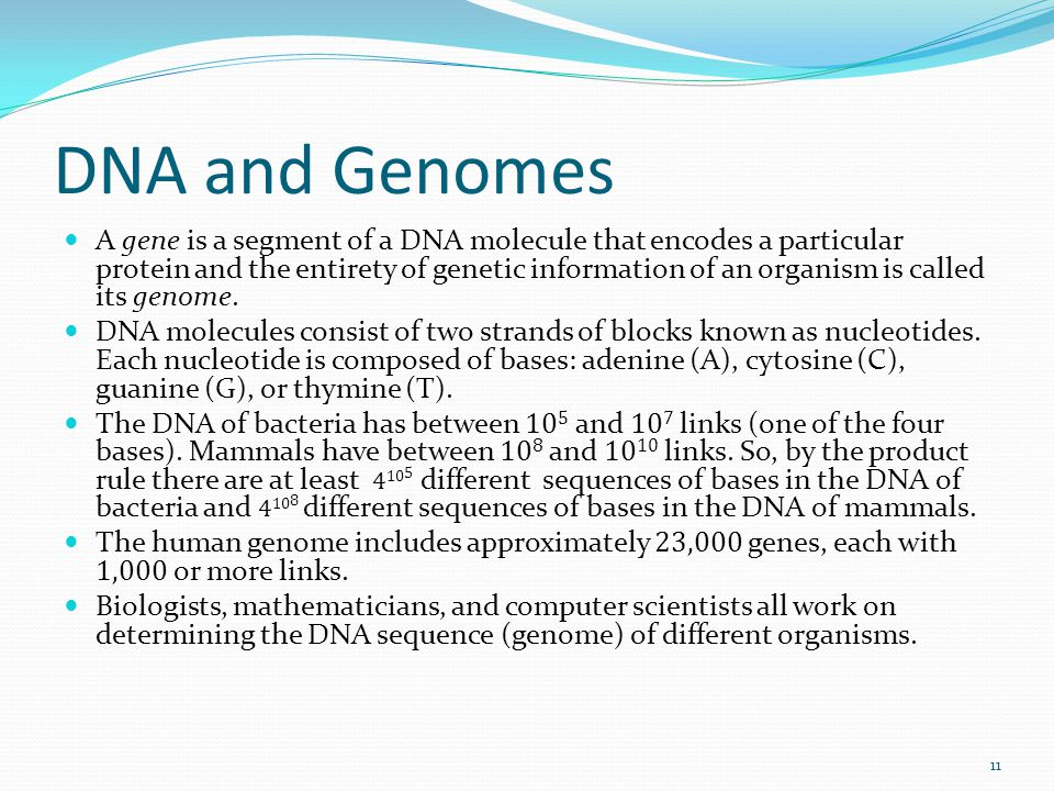 DNA and Genomes A gene is a segment of a DNA molecule that encodes a particular protein and the entirety of genetic information of an organism is call