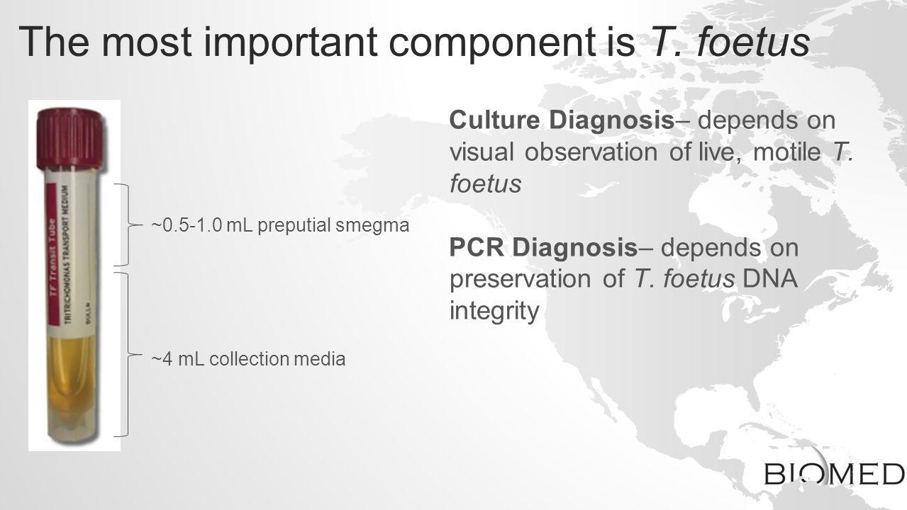 The most important component is T. foetus ~4 mL collection media ~0.5-1.0 mL preputial smegma Culture Diagnosis– depends on visual observation of live
