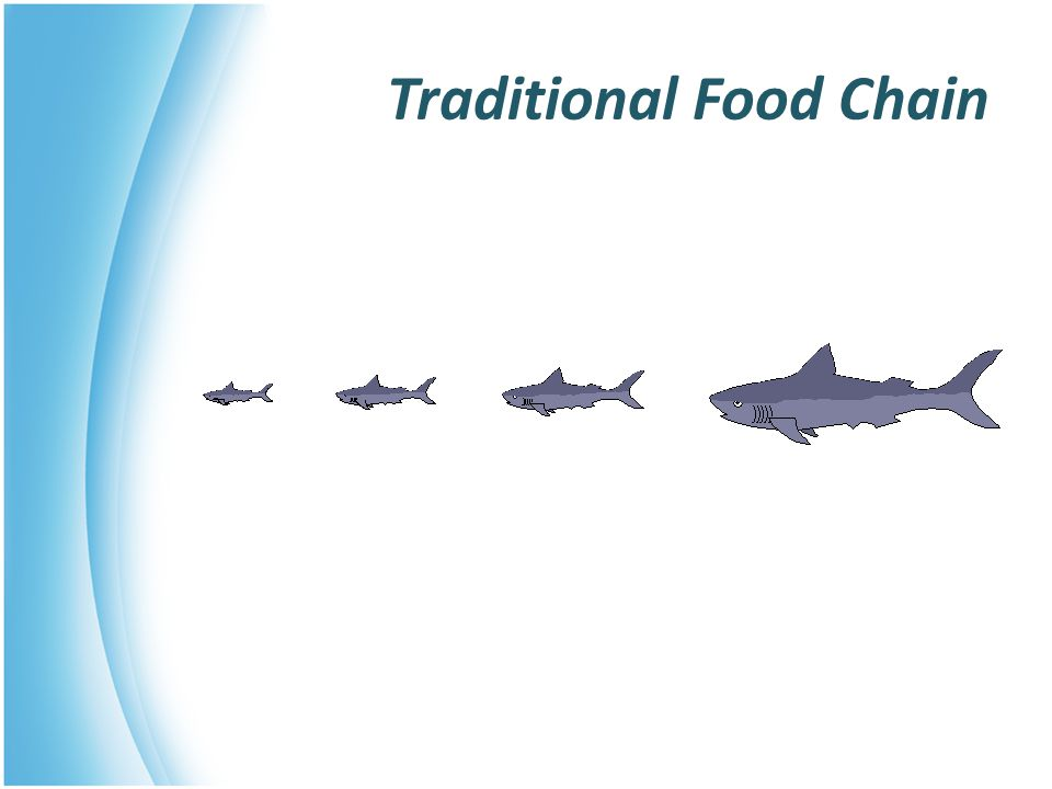 Traditional Food Chain