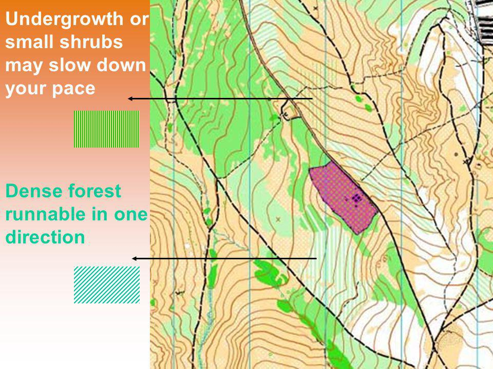 Undergrowth or small shrubs may slow down your pace Dense forest runnable in one direction