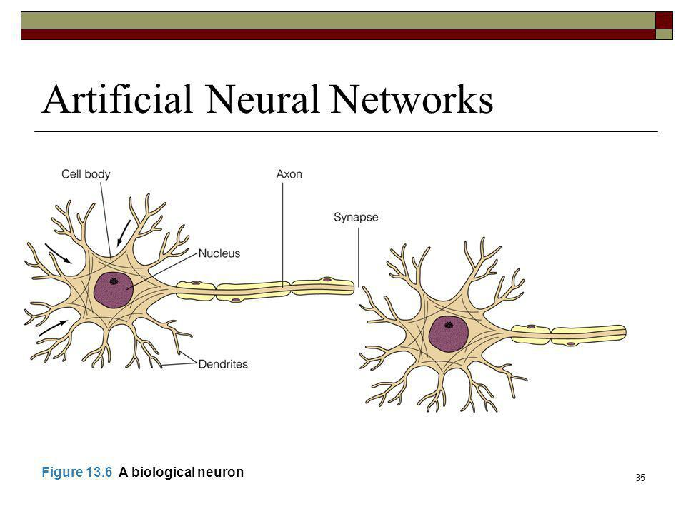 35 Artificial Neural Networks Figure 13.6 A biological neuron