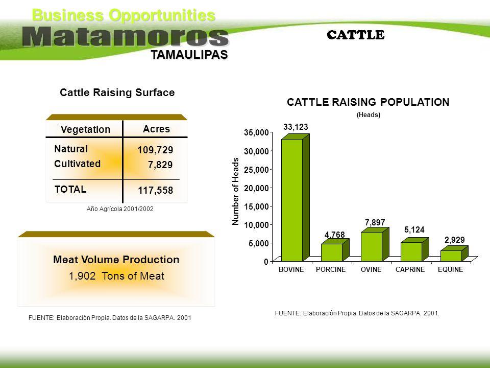 Business Opportunities TAMAULIPAS CATTLE Meat Volume Production 1,902 Tons of Meat FUENTE: Elaboración Propia. Datos de la SAGARPA. 2001 CATTLE RAISIN