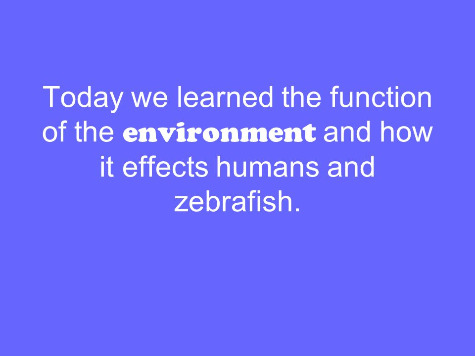 Today we learned the function of the environment and how it effects humans and zebrafish.