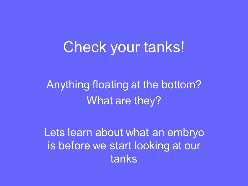 Check your tanks! Anything floating at the bottom? What are they? Lets learn about what an embryo is before we start looking at our tanks