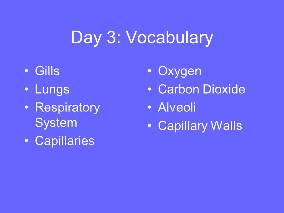 Day 3: Vocabulary Gills Lungs Respiratory System Capillaries Oxygen Carbon Dioxide Alveoli Capillary Walls