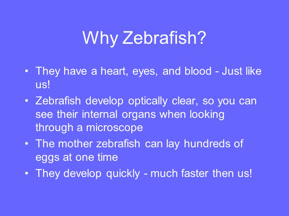 What are Zebrafish.Zebrafish are tropical, freshwater fish.
