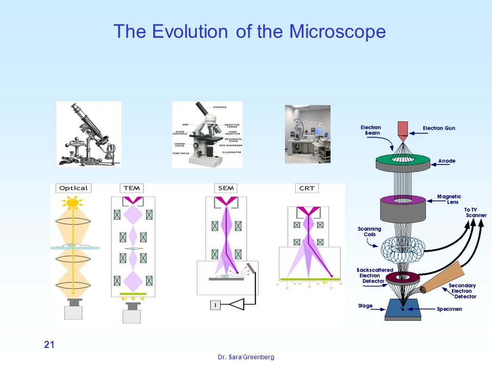 Dr. Sara Greenberg 21 The Evolution of the Microscope