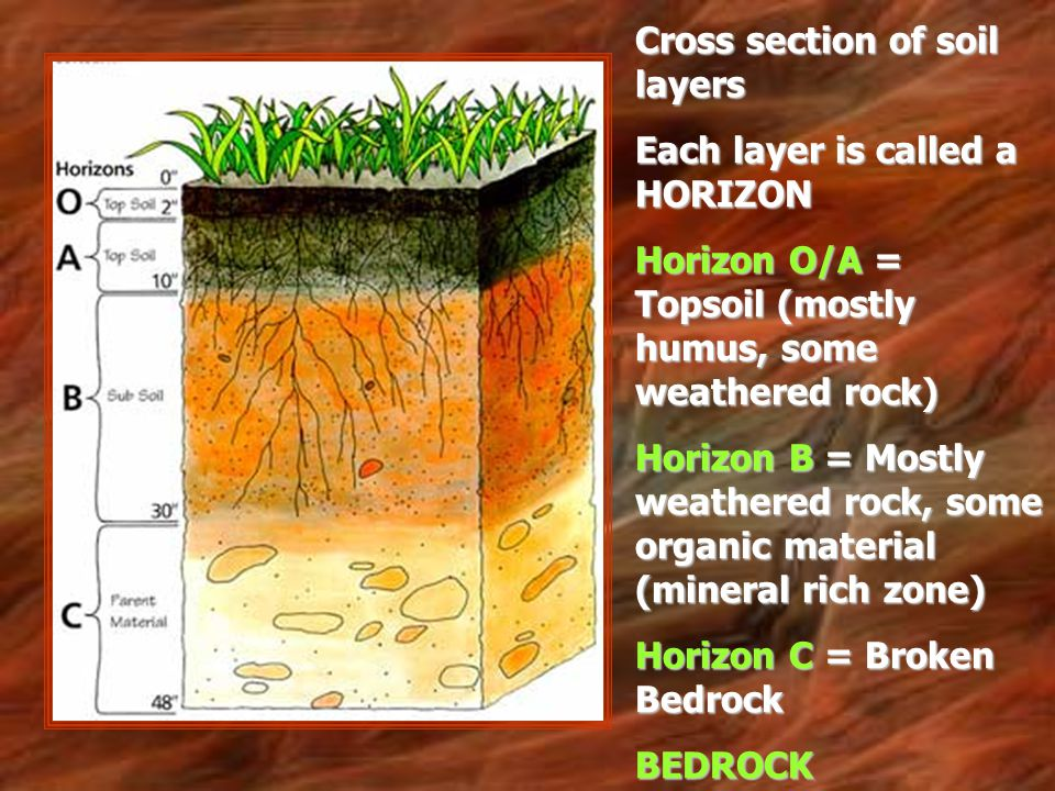 Cross section of soil layers Each layer is called a HORIZON Horizon O/A = Topsoil (mostly humus, some weathered rock) Horizon B = Mostly weathered roc