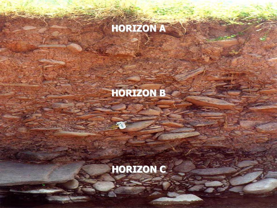 HORIZON A HORIZON B HORIZON C