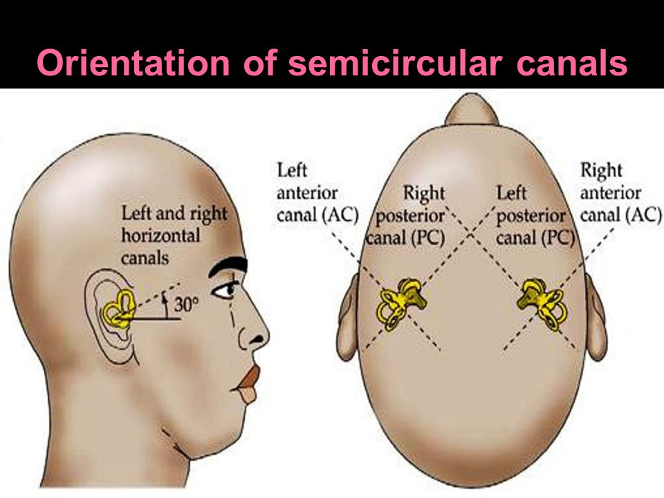 Orientation of semicircular canals